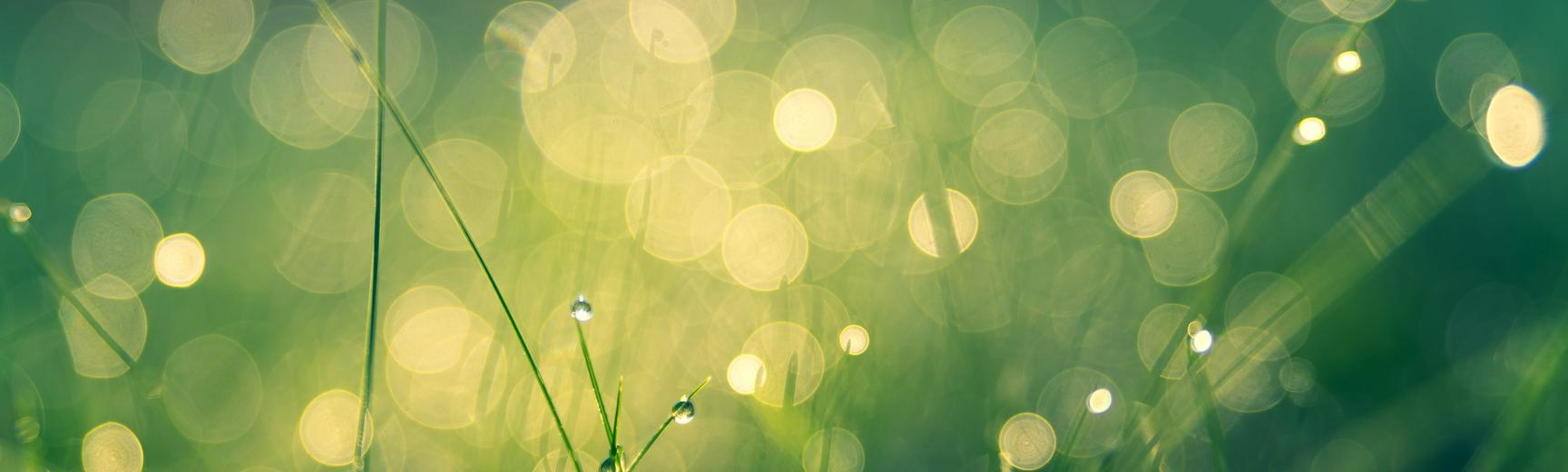 Unfocussed photo of green grass covered in rain drops caught in the sunlight
