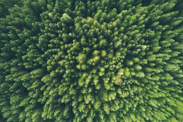 Aerial view of a dense green forest