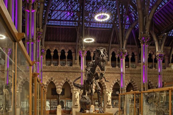 rd nhm purple