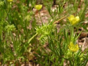 select weed species arne saatkamp4